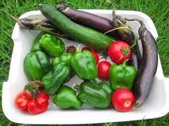 野菜を収穫しましたの画像