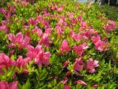 2014.5.10春の苑庭 003